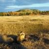 Prairie Dog Town